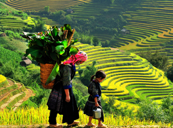 SP4 : Sapa - Bac Ha 3days and 4nights (Option 2)